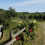 Azienda Colli di Poianis: non solo buon vino!